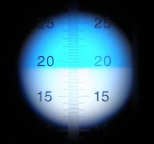 種なしデラウェア 糖度19度